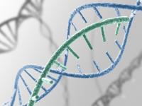 """""""Το γονιδίωμά μας. Γνώθι σ' αυτόν: Μύθος, προκλήσεις και προοπτικές"""""""