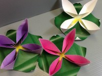 Origami Waterlily