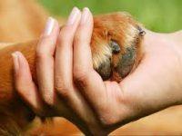 Pet Therapy για ογκολογικούς ασθενείς