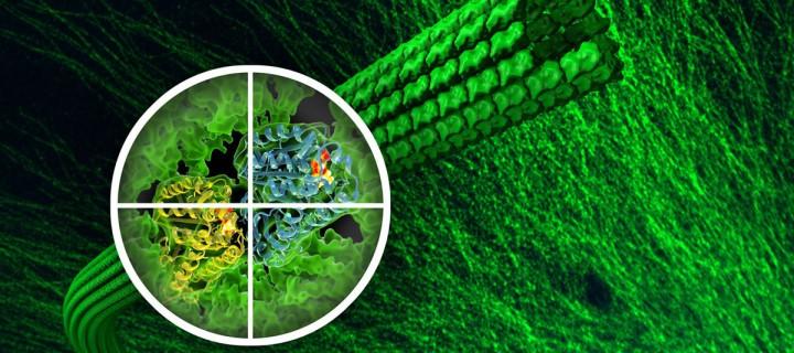 Ισχυρό αντικαρκινικό φάρμακο δημιουργούν στο Πανεπιστήμιο Πατρών