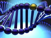 Γενετική Vs Οξείας Μυελογενής Λευχαιμίας
