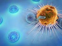 Η βλαστική ικανότητα των Τ-κυττάρων «όπλο» της ανοσοθεραπείας